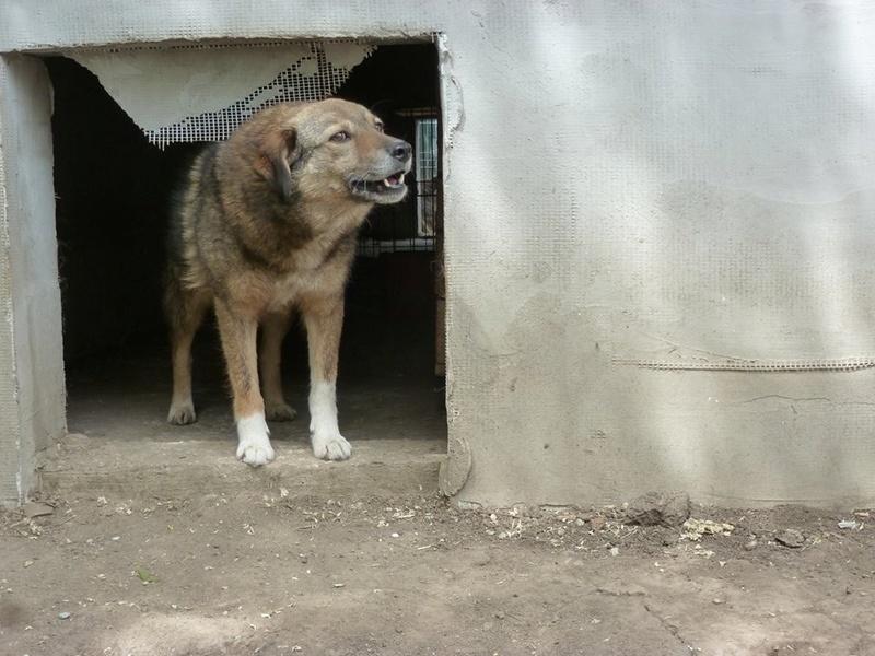 TIPPI - Très jolie femelle X berger poils mi-longs - née en 2009 - parrainée par Edni94 - R-SC- SOS - Page 3 32482910