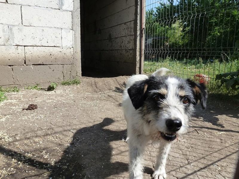 MACUMBA - griffon 8 ans  (4 ans de refuge) -Asso Arche d'Eternité (Roumanie) 32590510