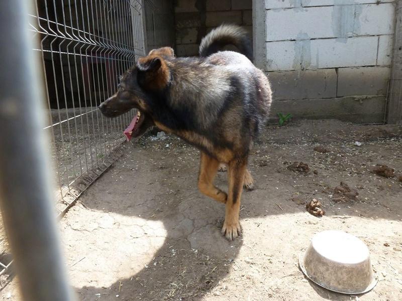 TINNA,  née en 2012 trouvée dans la rue par Lenuta - marrainée par lilirez02 -R-SC 32729510