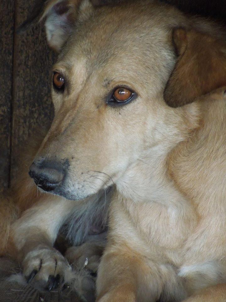 BAILEYS, née en 2011, sauvée de l'équarrissage - parrainée par Nathalie -SOS-R-SC - Page 3 33125011