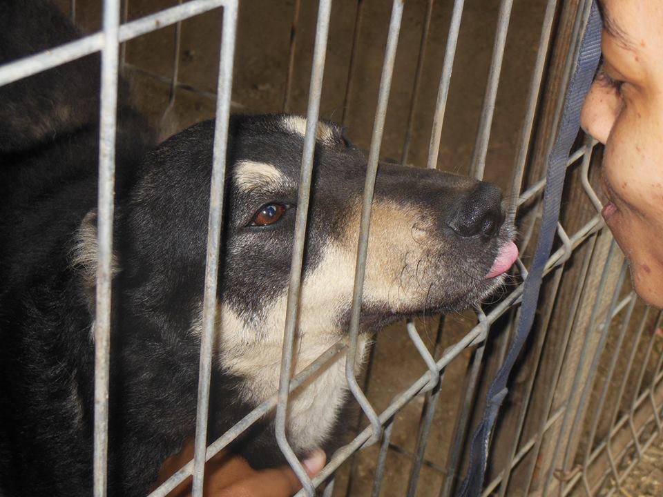 SOUKI, Femelle type berger, née en 2014 - Noire et crème- marrainée par Myri_Bonnie -R-SC-SOS- 33144210