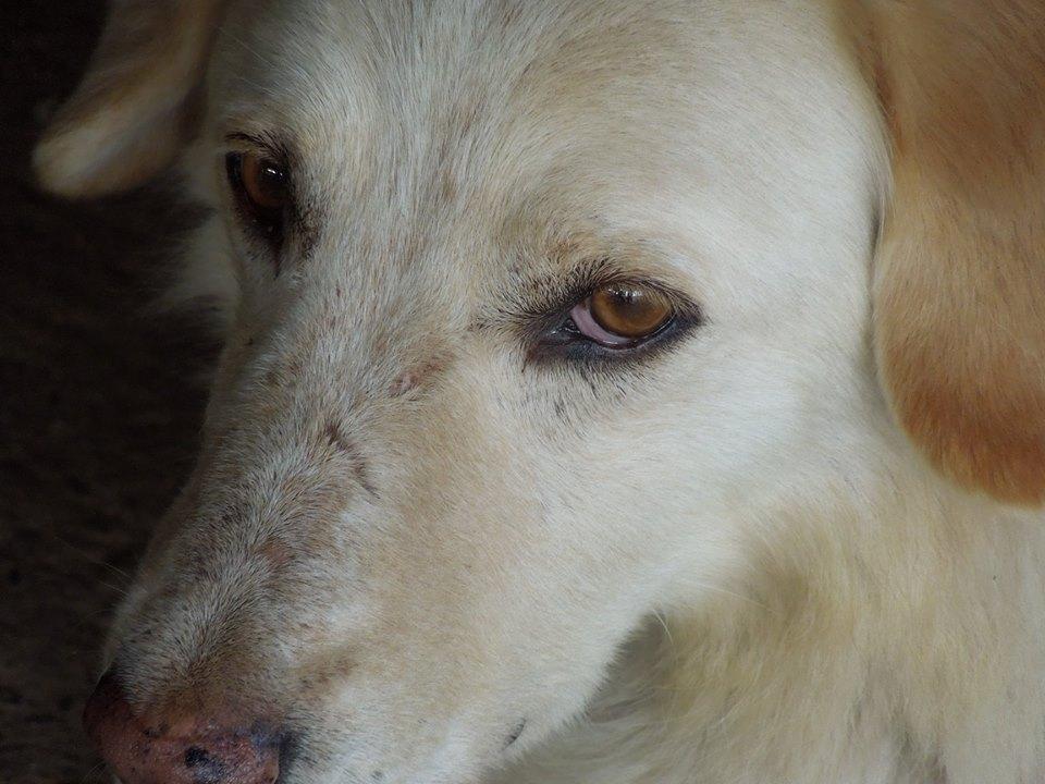 BALANUCH, mâle croisé berger sauvé de Pallady, né en 2009 parrainé par Nathalie Gamblin-SC-R-SOS- - Page 2 33400413
