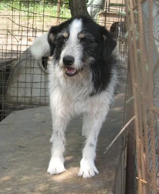 MACUMBA - griffon 8 ans  (4 ans de refuge) -Asso Arche d'Eternité (Roumanie) Macumb10