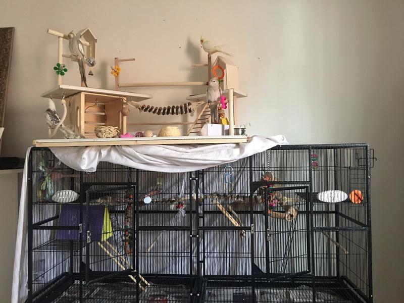 Assemblage de cage model B2477 C20dba10