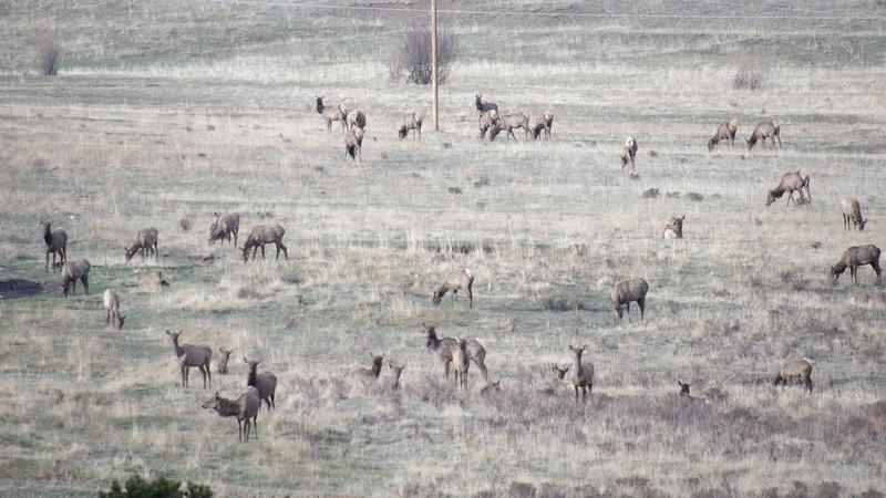 Saw a few elk 100_1412