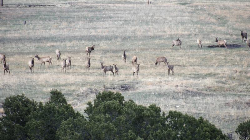 Saw a few elk 100_1416
