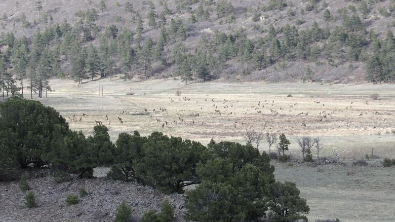 Saw a few elk 100_1425