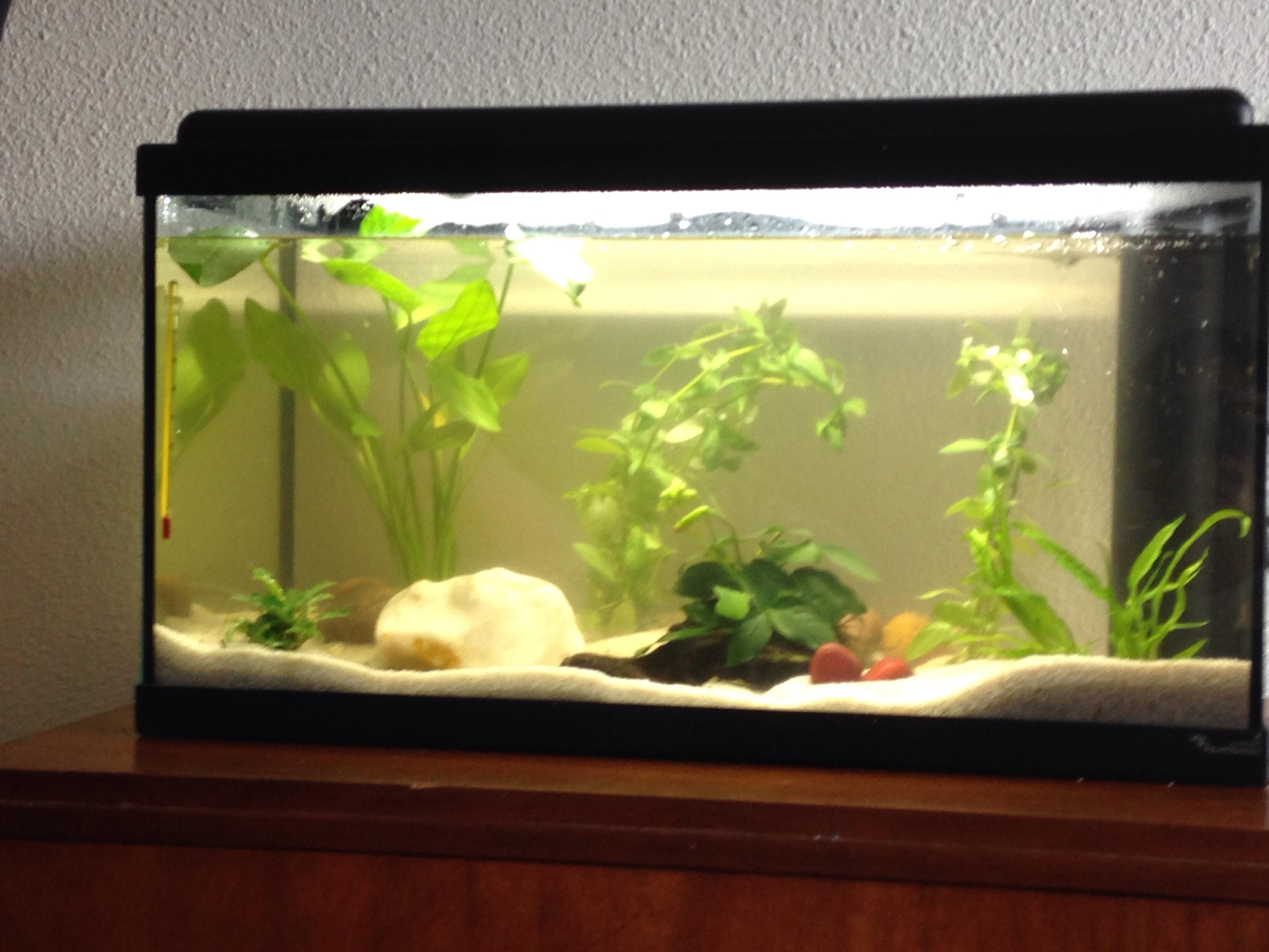 Quels poissons choisir pour débuter Img_9812