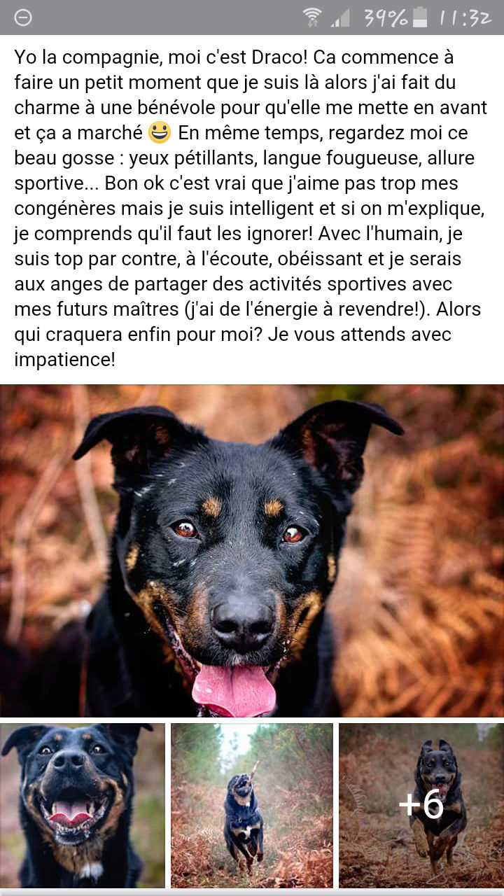 DRACO, croisé beauceron né en 2013 Scree102