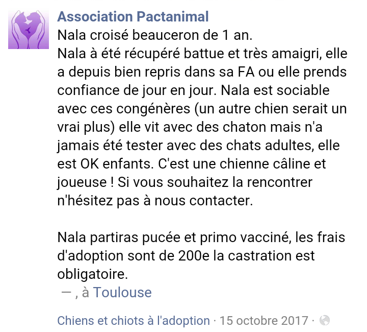 NALA croisée beauceronne née en 2016 en Famille d'Accueil Scree106