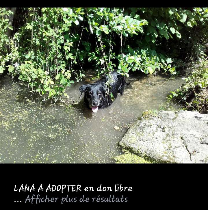 Lana croisée beauceronne née en 2011 (âge estimé) Scree157