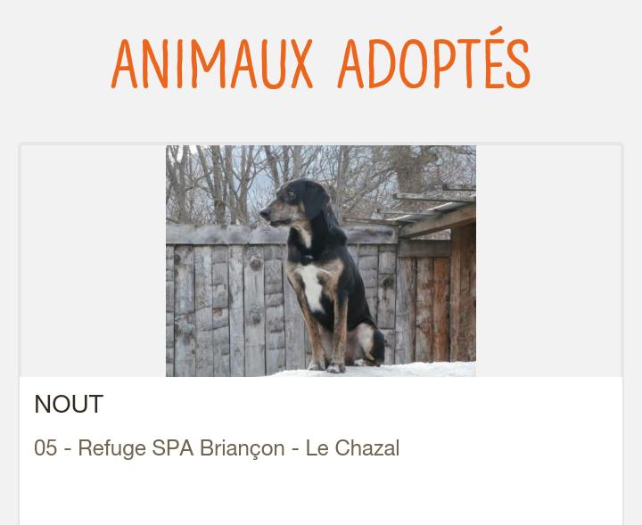NOUT mâle croisé berger-beauceron né en 2014, chien très sympa  Scree169