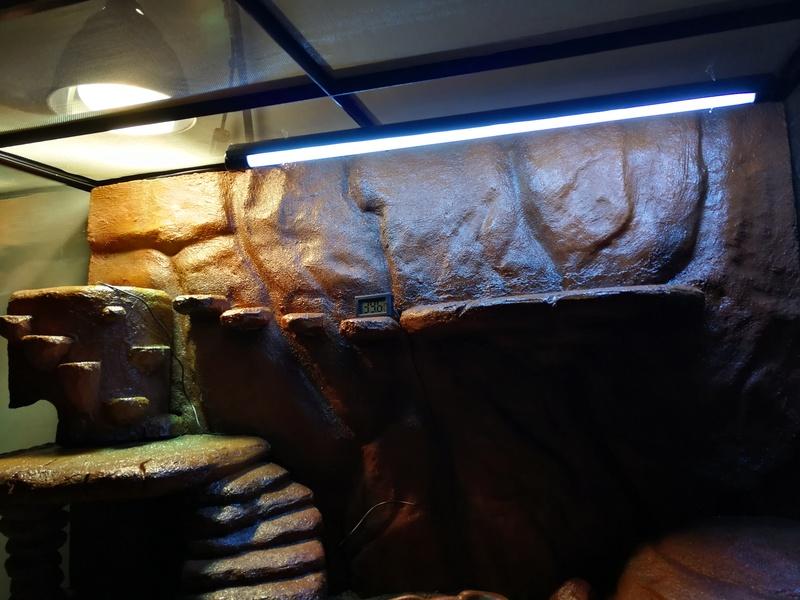 Le terrarium pour notre futur Henrylawsoni Img_2010