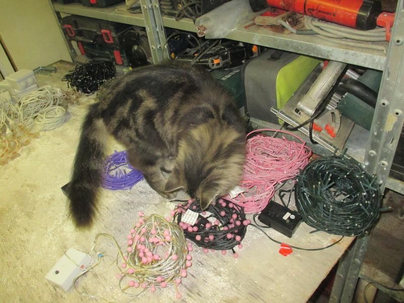 Illuminator 2017: chats et lumières... Img_1011