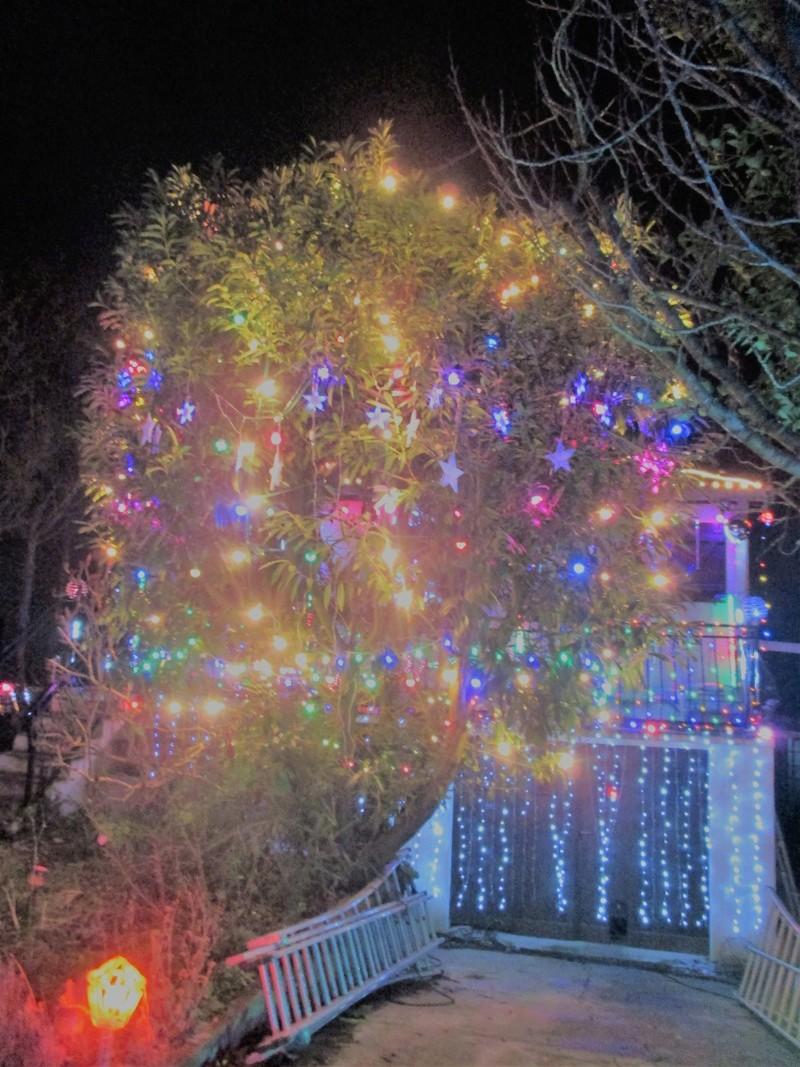 Illuminator 2017: chats et lumières... Img_1226
