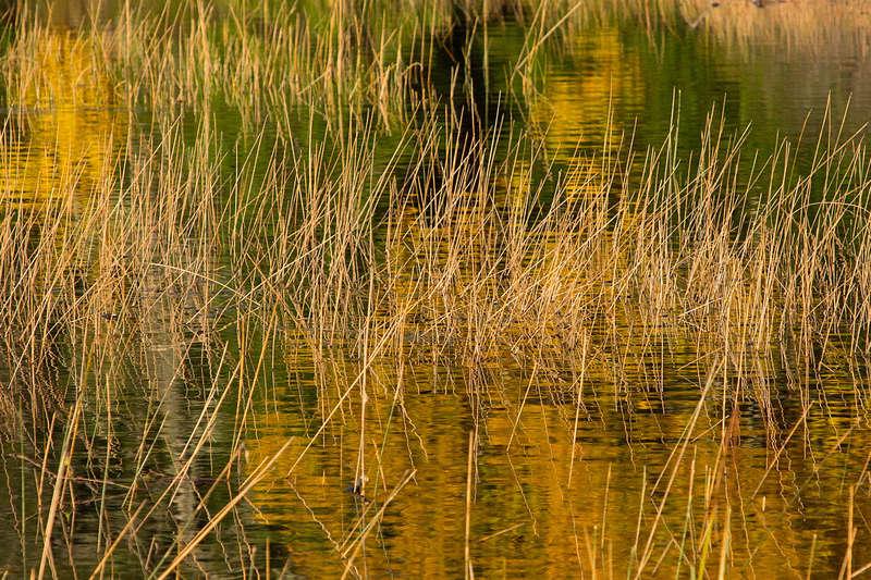 Réflexions sur le lac Monroe. C258510