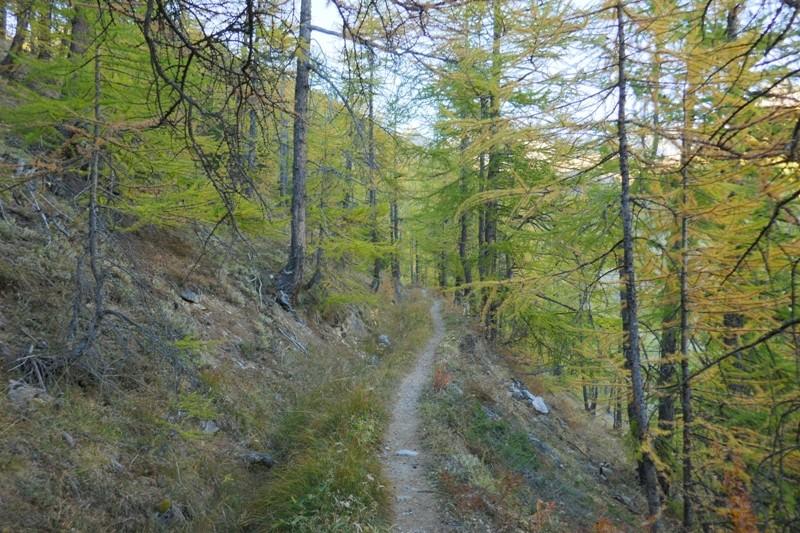 Petit tour dans le Queyras, pour voir les Mélèze en feu  (enfin doré quoi !) P1040915