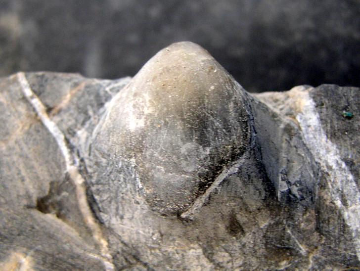 Braquis - Devonico - Pirineo P1010025