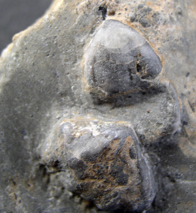 Braquis - Devonico - Pirineo P1010028