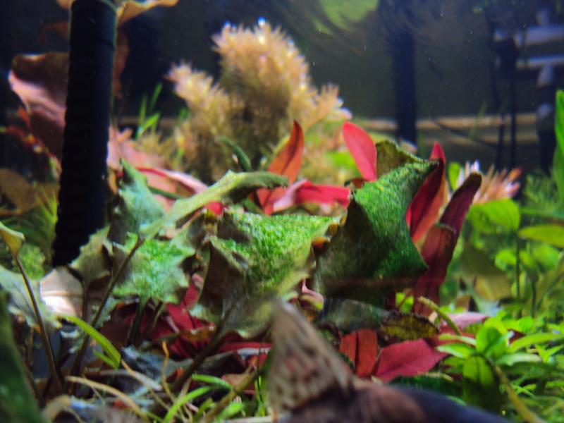 algues Dsc01414