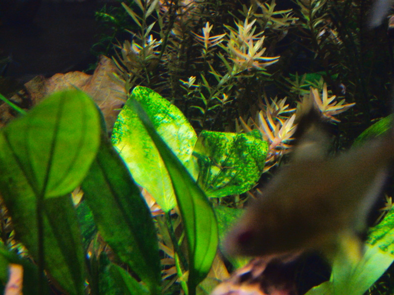 algues Dsc01415