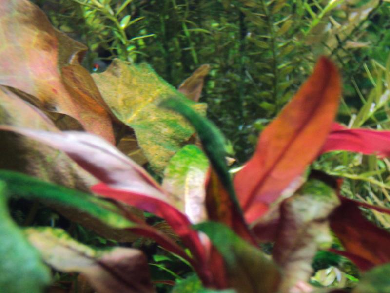 algues Dsc01416