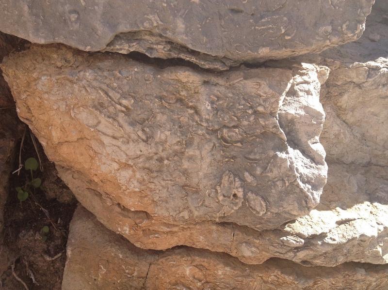 Un article très complet sur les cratères d'impact  Fossil11