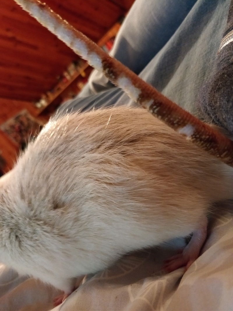 Mon rat s'épluche la queue Img_2011