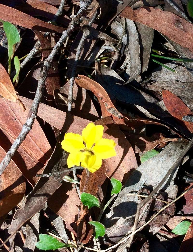 Road Trip - NSW Braidwood/Majors Creek/ Araaluen Image32