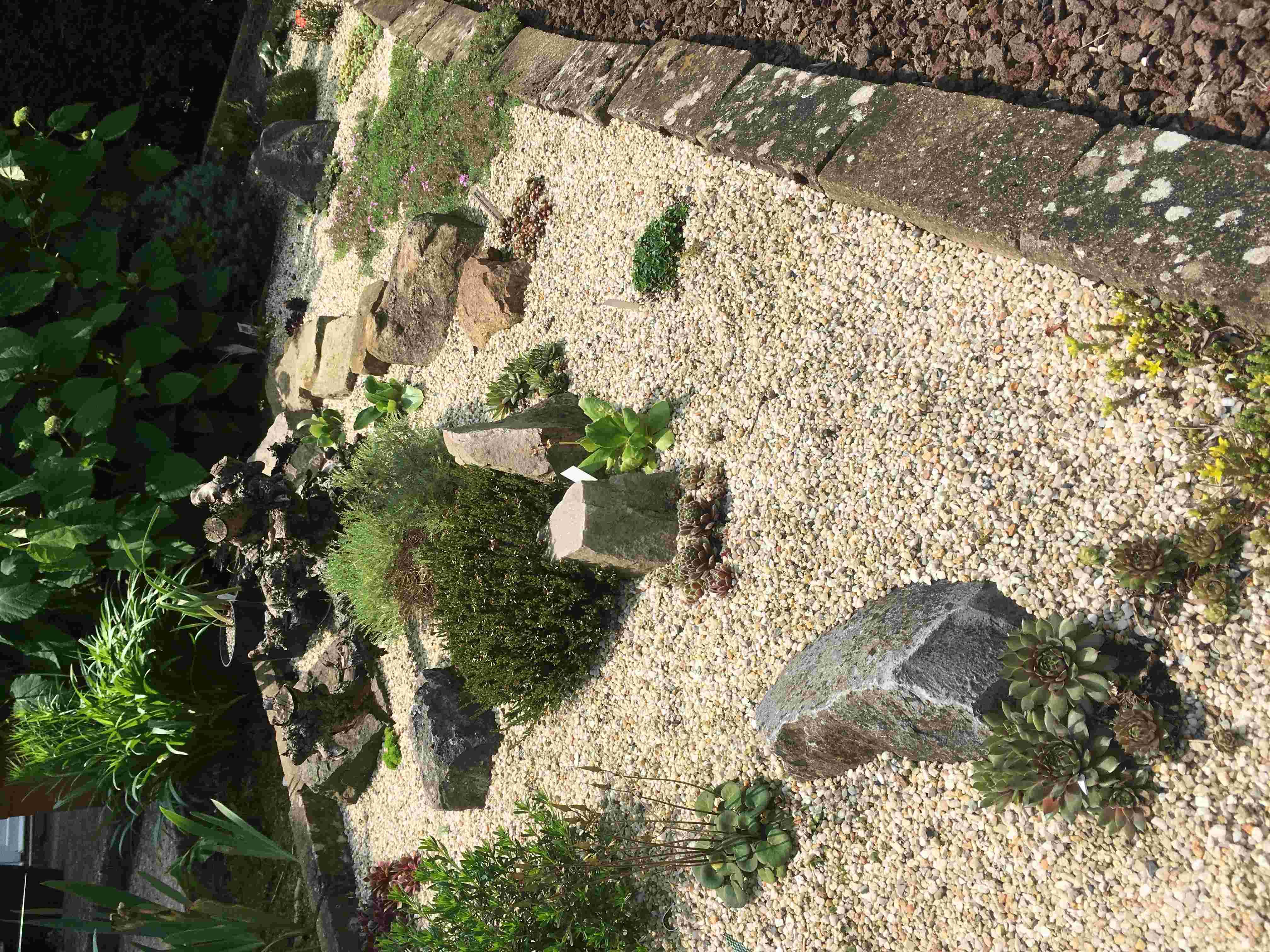 Histoire d'une rocaille 16ac7111