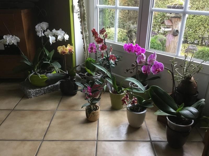 Floraison des orchidées de juin à........... - Page 4 2f13b610