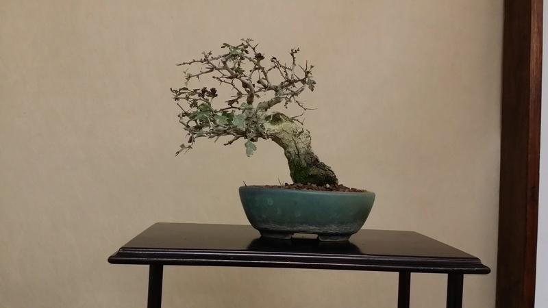 [WIP] Biancospino semicascata shoin - Pagina 2 20171010