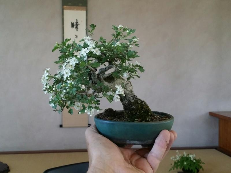[WIP] Biancospino semicascata shoin - Pagina 2 20180422