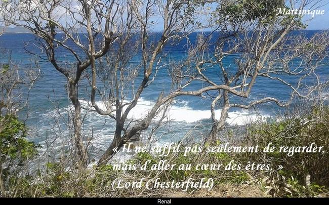 citation du jour/celebres et images de colette - Page 12 Au_coe10