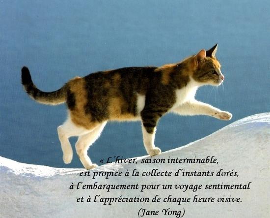 citation du jour/celebres et images de colette - Page 13 L_hive10