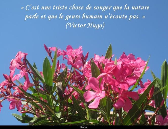 citation du jour/celebres et images de colette - Page 12 La_nat10
