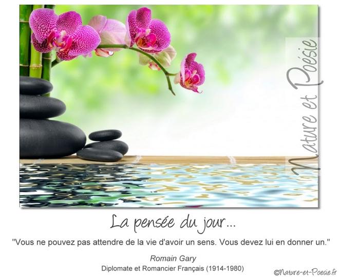 citation du jour/celebres et images de colette - Page 12 La_vie17