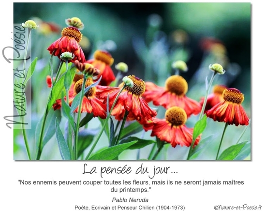 citation du jour/celebres et images de colette - Page 13 Le_pri10