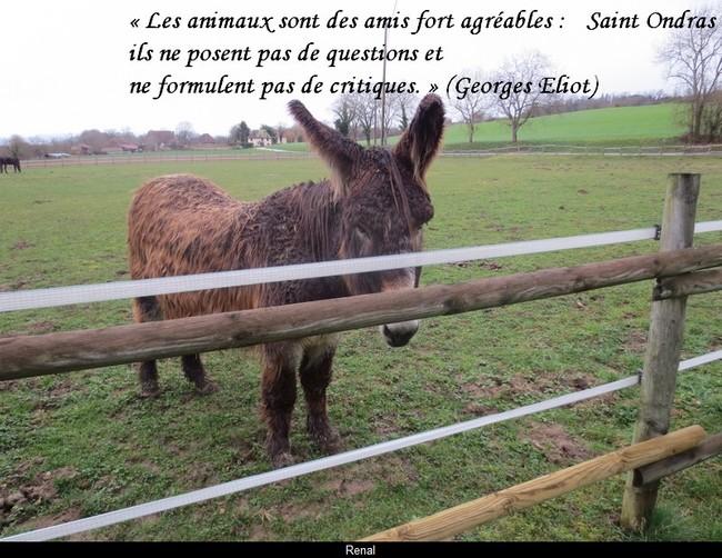 citation du jour/celebres et images de colette - Page 12 Les_an10