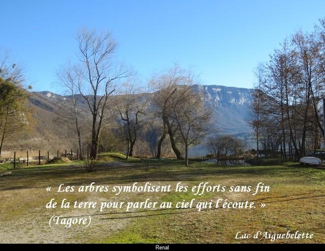 citation du jour/celebres et images de colette - Page 12 Les_ar11