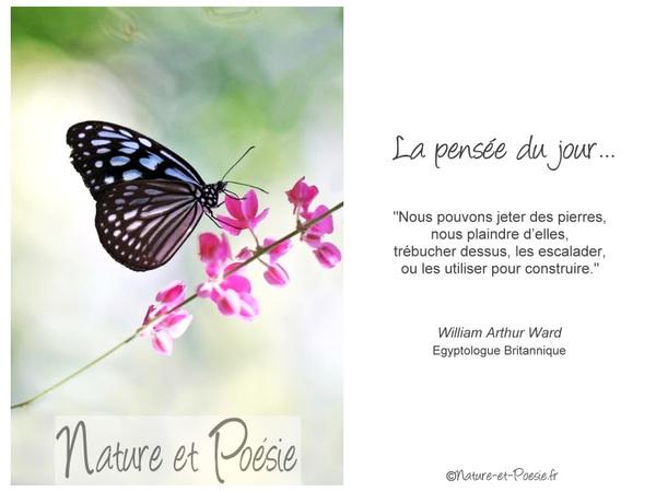 citation du jour/celebres et images de colette - Page 12 Les_pi10