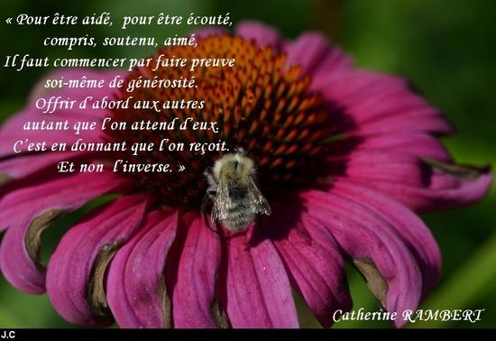 citation du jour/celebres et images de colette - Page 13 Pour_e10