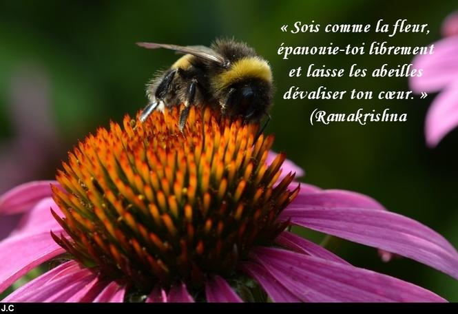citation du jour / celebre / et images - Page 7 Sois_c10