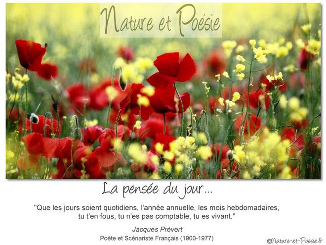 citation du jour/celebres et images de colette - Page 11 Tu_es_10