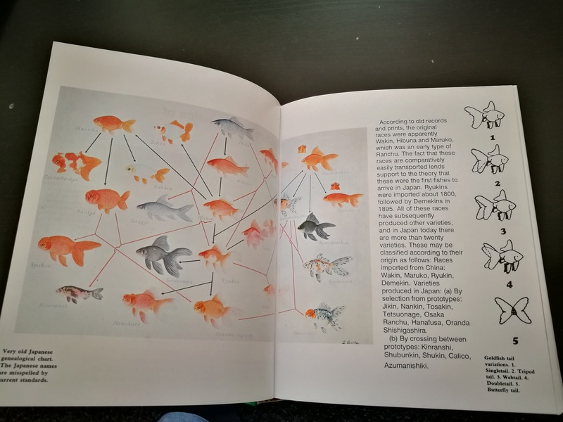 Goldfish Guide by Dr. Yoshiichi Mastsui & Dr. Herbert R. Axelrod Img_2050