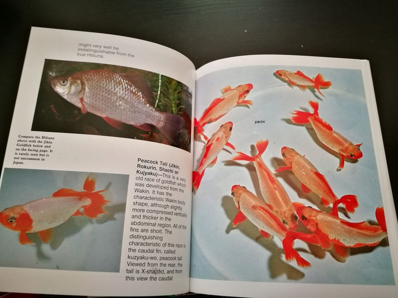 Goldfish Guide by Dr. Yoshiichi Mastsui & Dr. Herbert R. Axelrod Img_2052