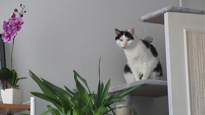 Edgi, adore les autres chats ! Aidofélins Maisons-Laffitte (78) - Page 2 Img_0610