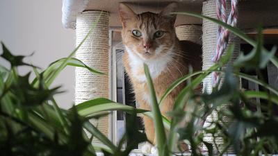 Edgi, adore les autres chats ! Aidofélins Maisons-Laffitte (78) - Page 2 Img_0612