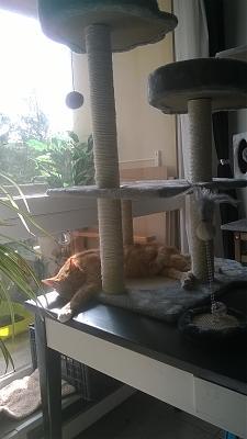 Edgi, adore les autres chats ! Aidofélins Maisons-Laffitte (78) - Page 2 Wp_20110