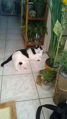 Edgi, adore les autres chats ! Aidofélins Maisons-Laffitte (78) - Page 2 Wp_20111